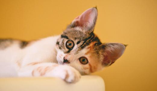 hogares con mascotas - sanicentro